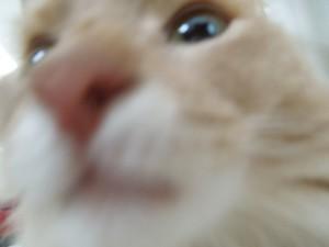 鼻を近づけるソマリ