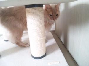 キャットタワーに隠れる猫