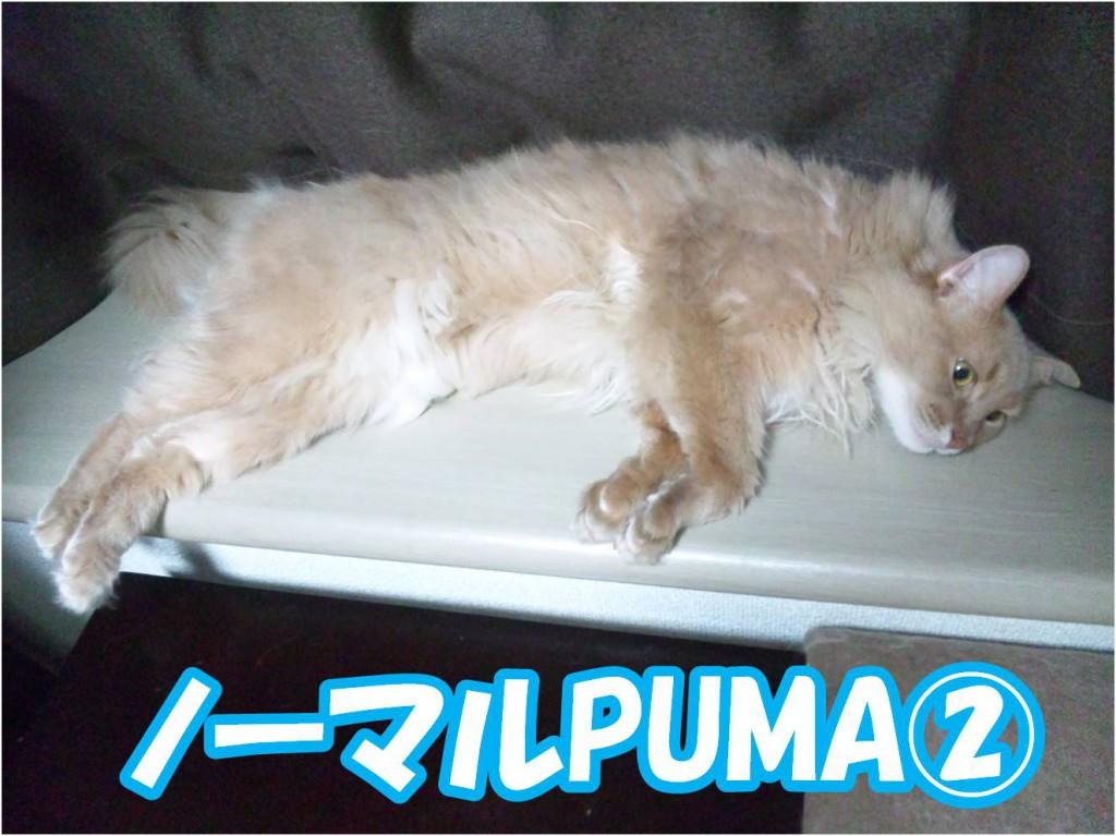 まだまだノーマルなPUMA状態。