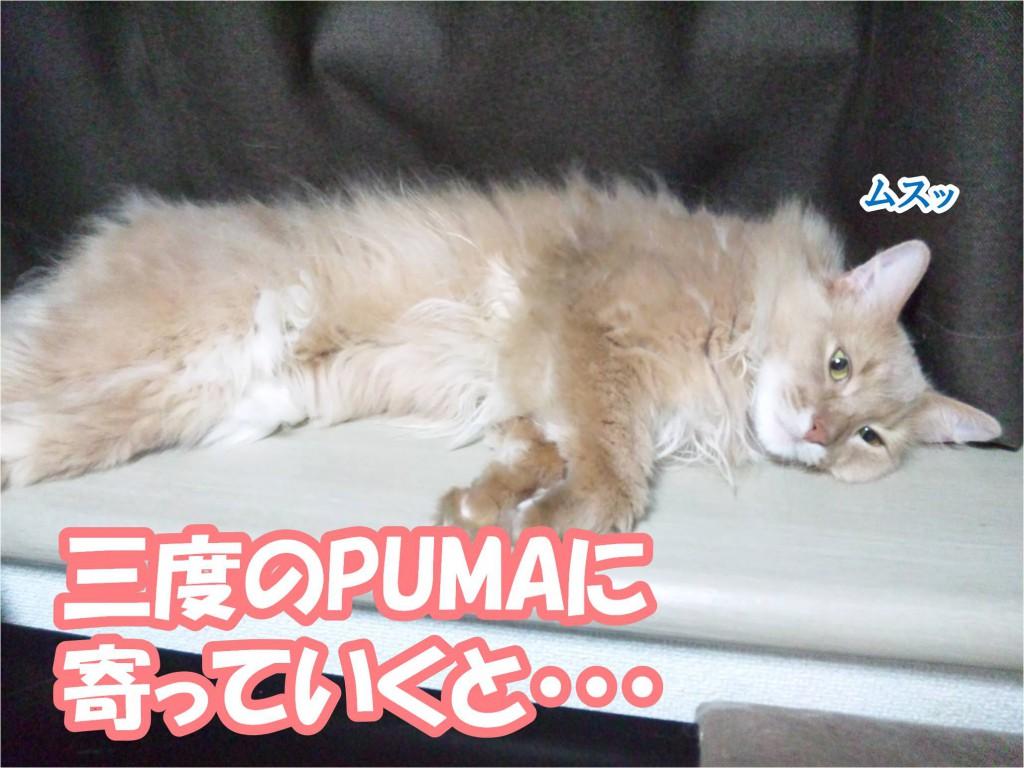 PUMA状態にズーム!