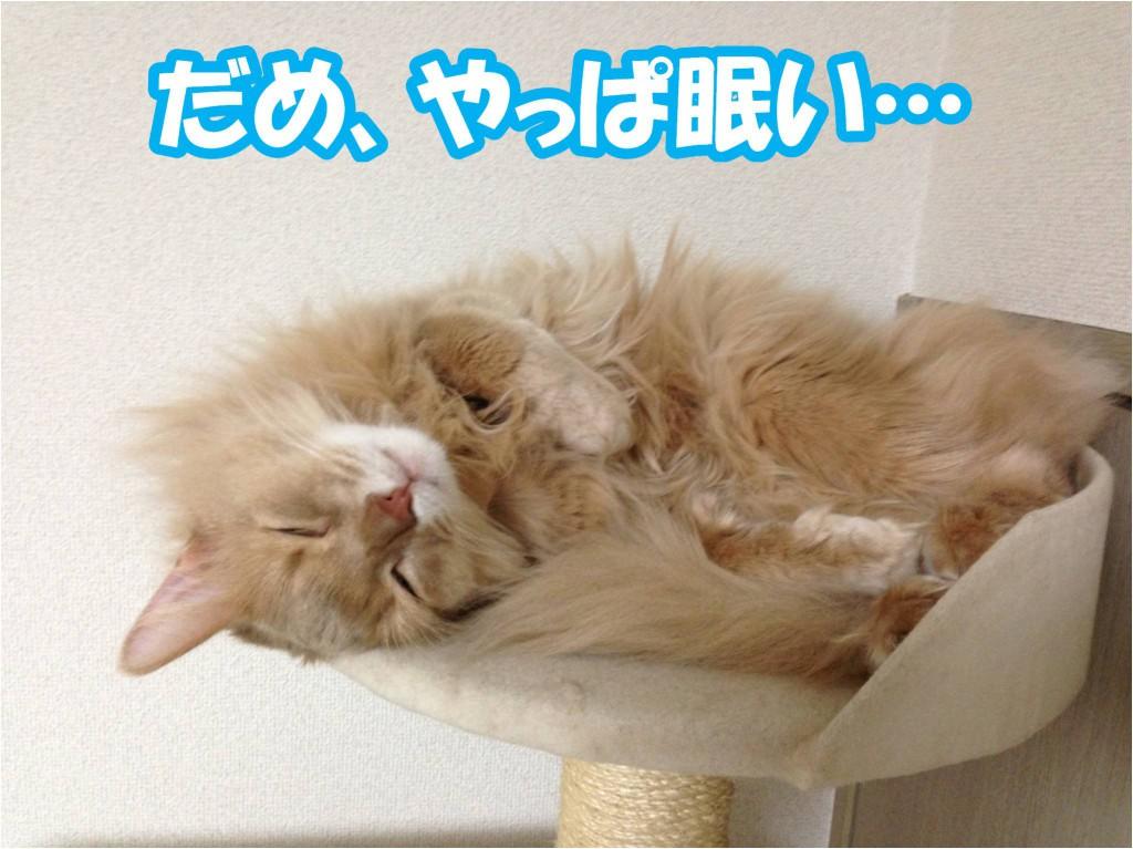 疲れて眠い