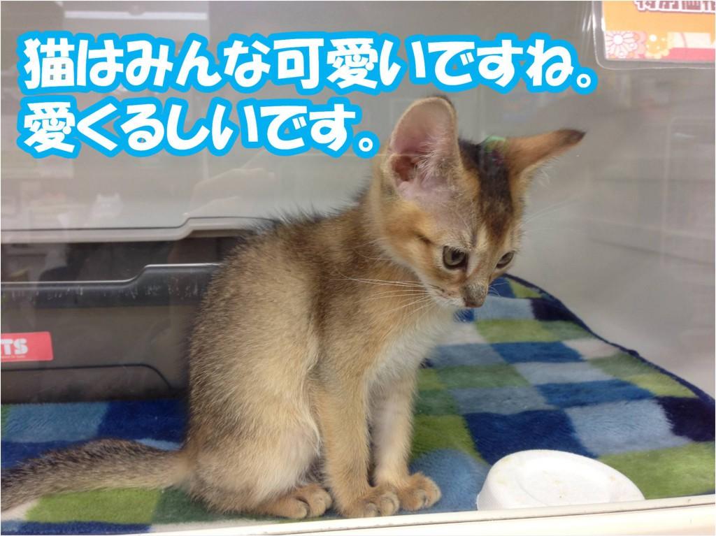 猫は可愛い