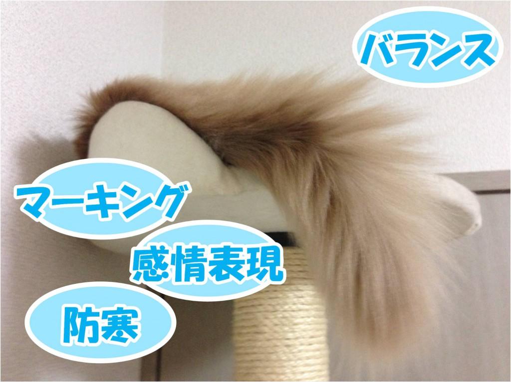 尻尾の機能