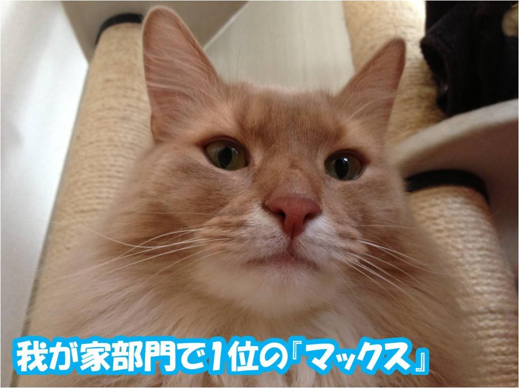 愛猫ソマリ