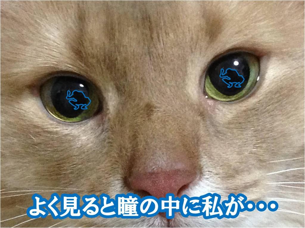 目の中に私がいます