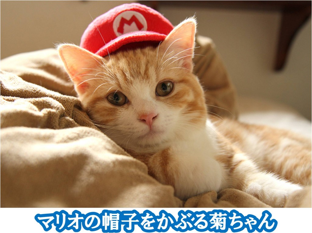 マリオの帽子をかぶる菊之助