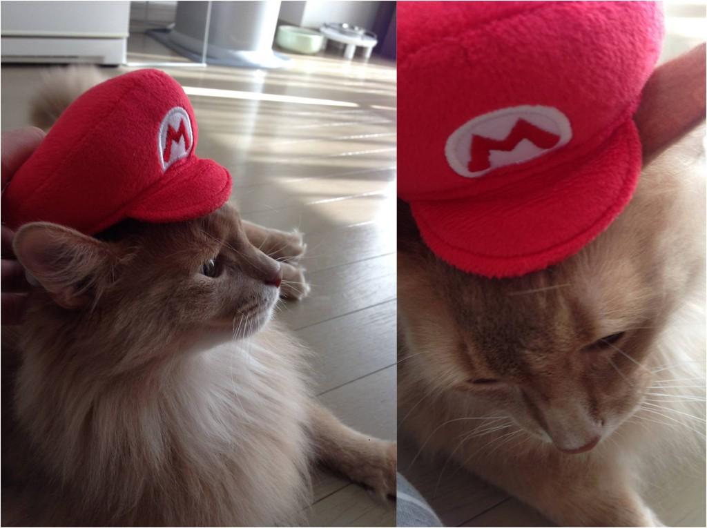 マリオの帽子をかぶったマックス