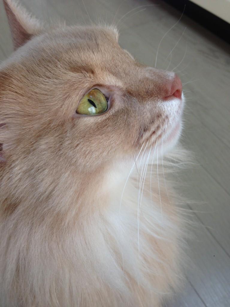 ソマリの目
