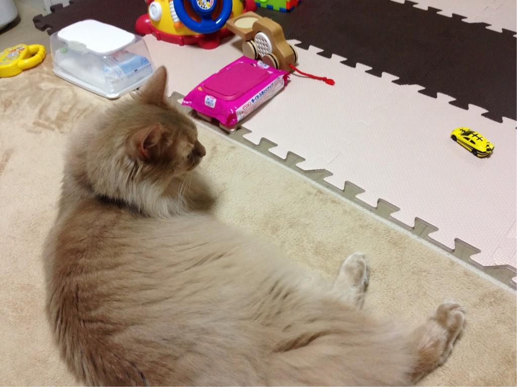 玩具の周りで寝る1