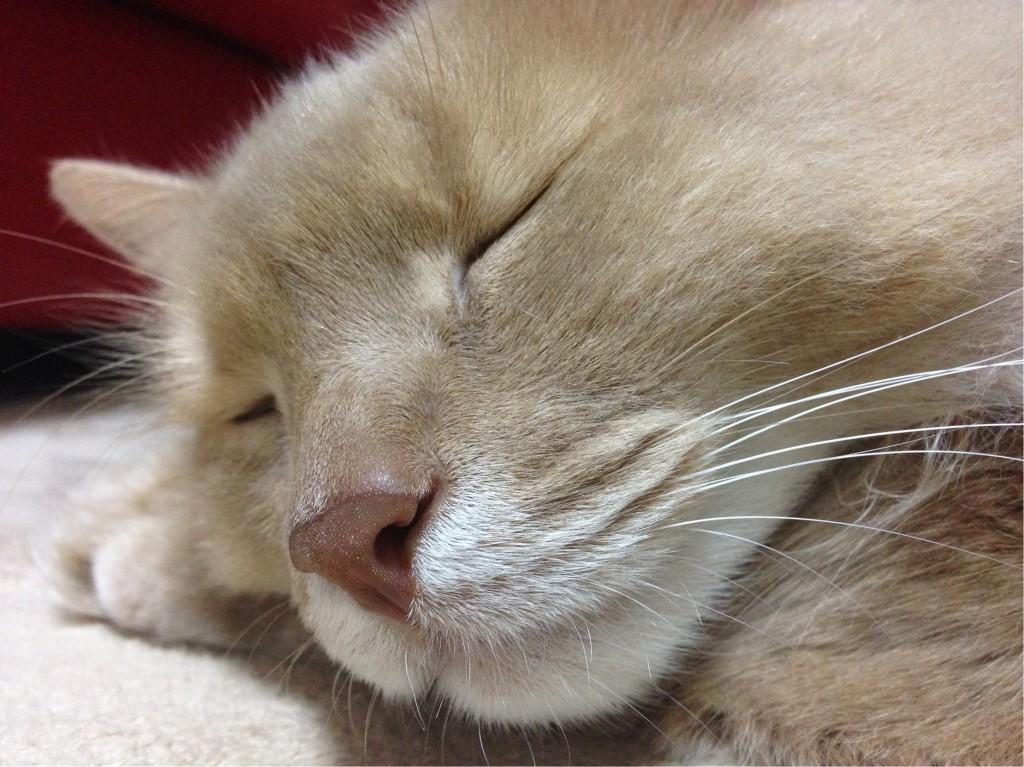 幸せな睡眠
