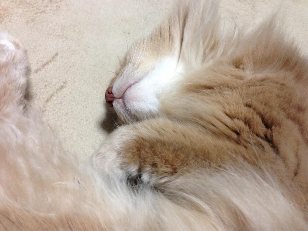 寝るソマリ