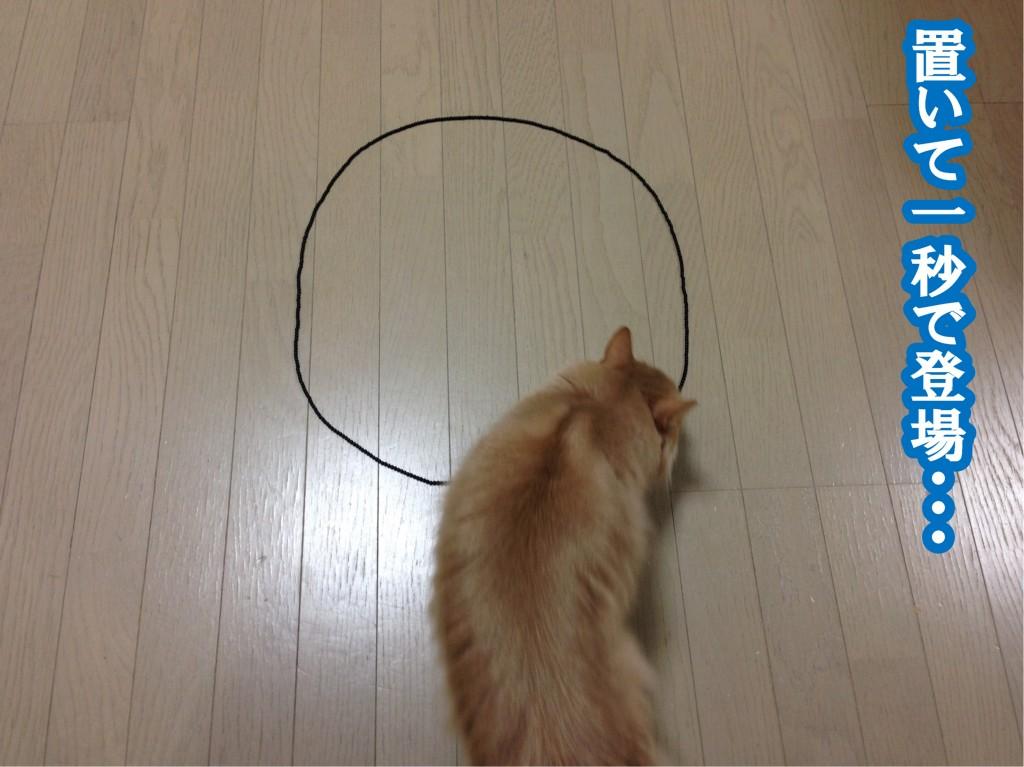 猫転送装置1