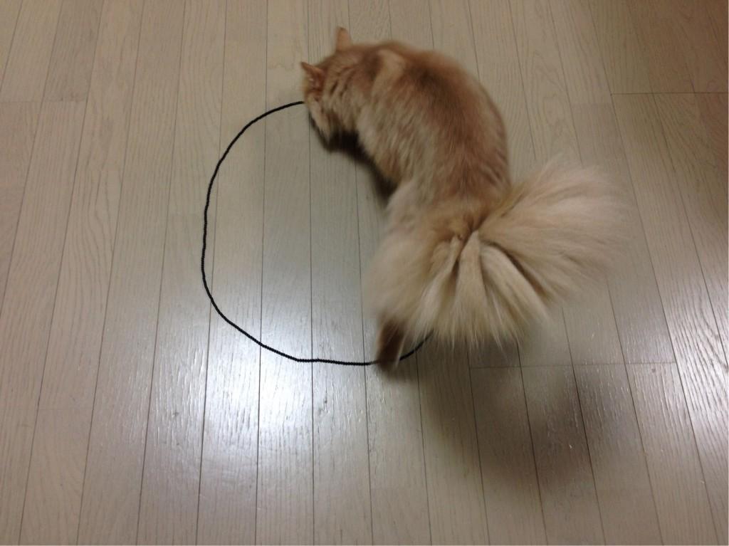 猫転送装置3