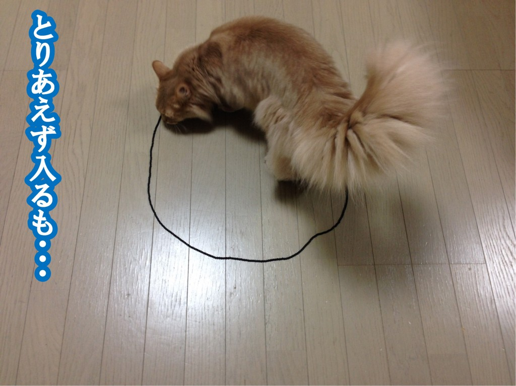 猫転送装置4