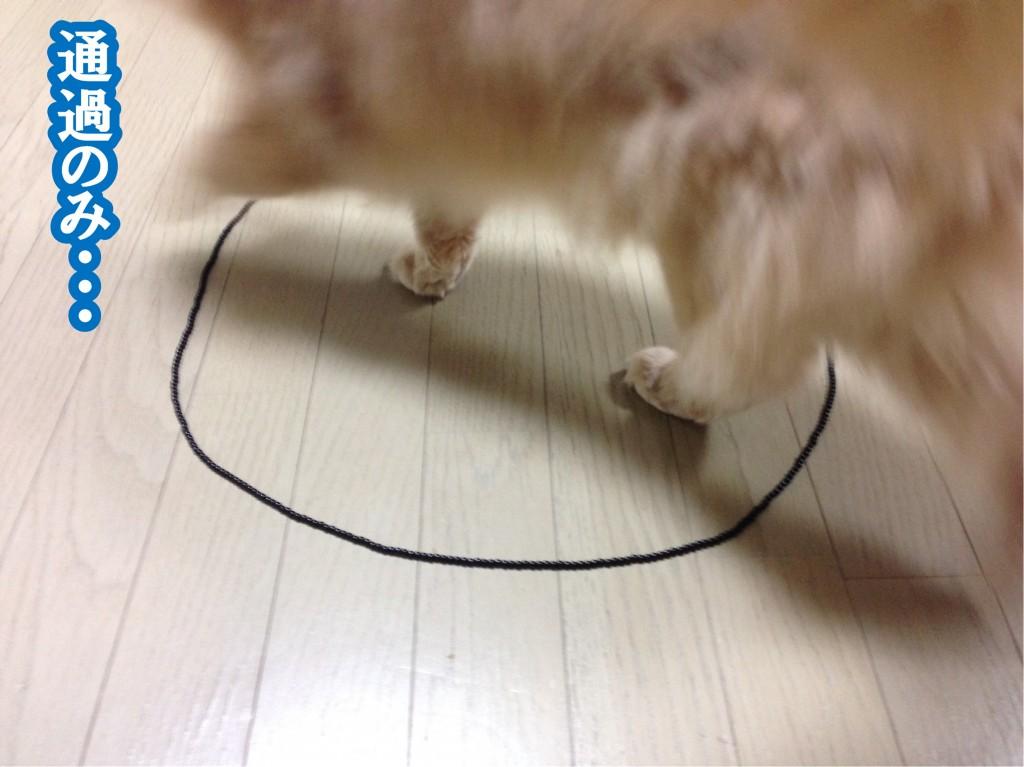 猫転送装置6