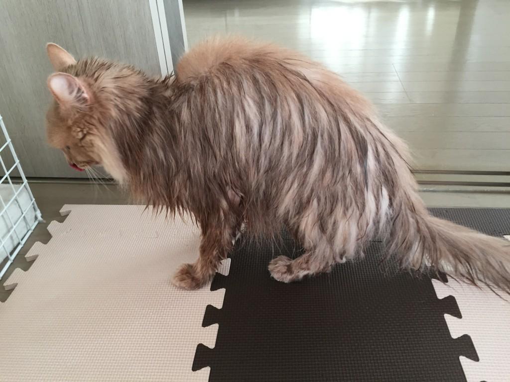 シャワー後2