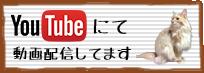 Youtubeチャンネルはこちら