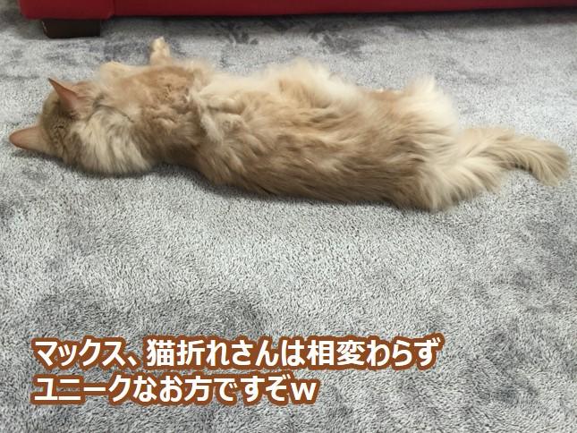 猫折れさんはユニーク