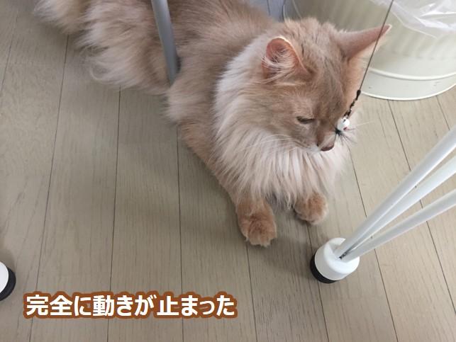 止まる猫①